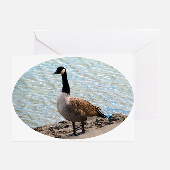 Canadian Goose- Greeting Card