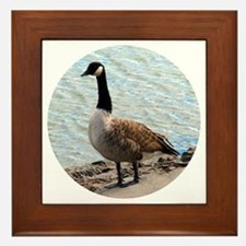 Canadian Goose- Framed Tile