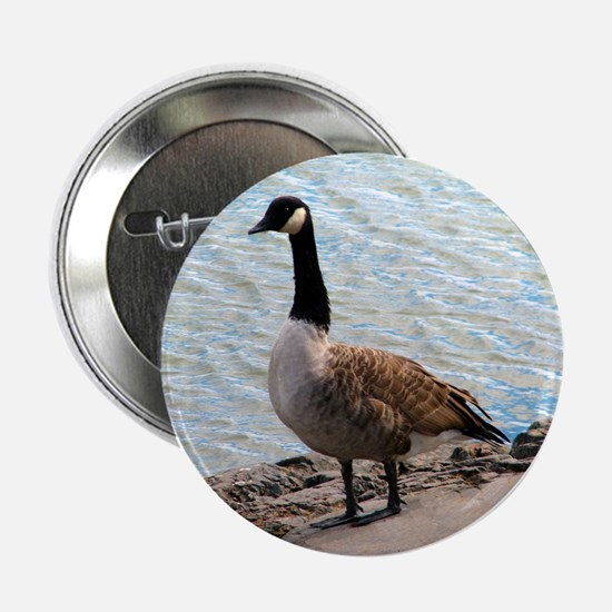 """Canadian Goose- 2.25"""" Button"""