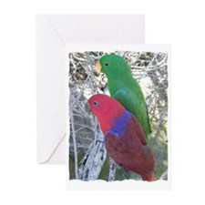 Eclectus Parrots Greeting Cards (Pk of 10)