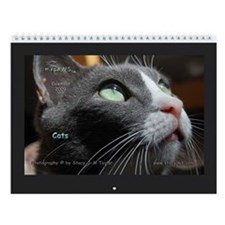Cats in Color Wall Calendar 2009