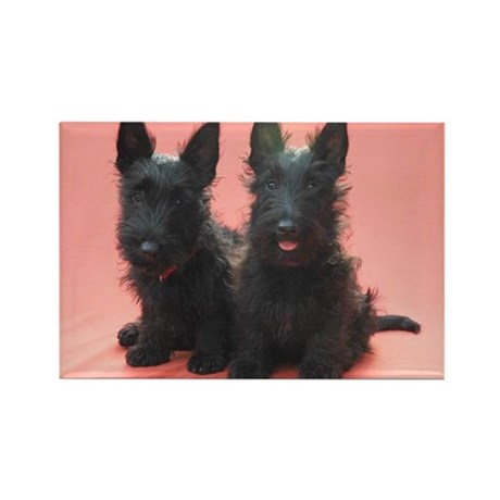 Scottish Terriers Rectangle Magnet (100 pack)