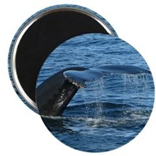 Whale Tail II- Magnet