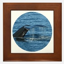 Whale Tail II- Framed Tile