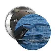"Whale Tail II- 2.25"" Button"