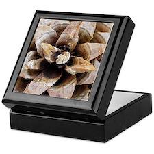 Pine Cone Detail No. 1 Keepsake Box