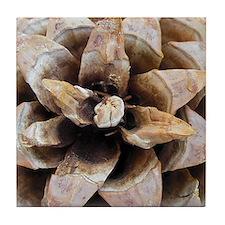 Pine Cone Detail No. 1 Art Tile