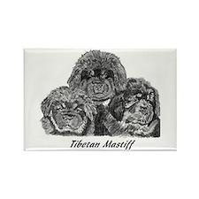 Cute Tibetan mastiff Rectangle Magnet