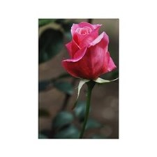 Pink Rosebud Rectangle Magnet