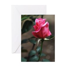 Pink Rosebud Greeting Card