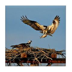 Osprey Bringing Fish Tile Coaster