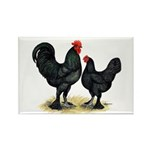 Black Langshan Chickens Rectangle Magnet (10 pack)