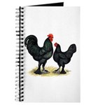 Black Langshan Chickens Journal