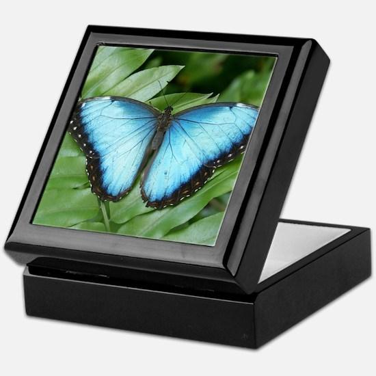 Blue Morpo Tropical Butterfly Keepsake Box