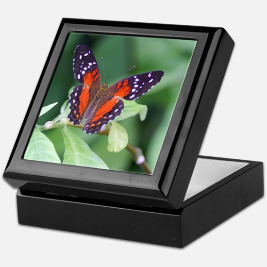Tropical Butterfly Keepsake Box