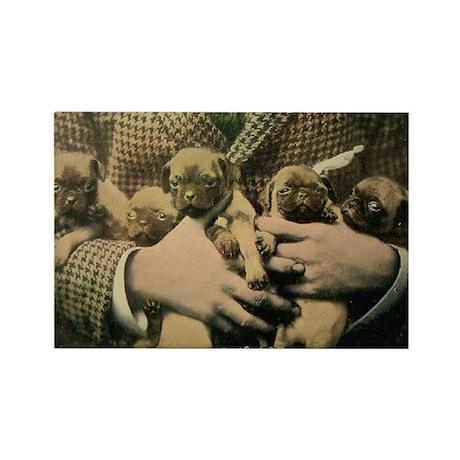 Vintage Pug Puppies Rectangle Magnet