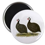 """Chocolate Guineas 2.25"""" Magnet (10 pack)"""