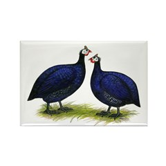 Royal Purple Guineas Rectangle Magnet (10 pack)