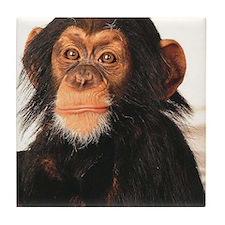Chimpanzee Tile Coaster