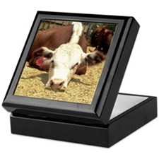 Hereford Steer Keepsake Box