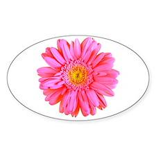 Gerbera (Bright Pink) Oval Decal