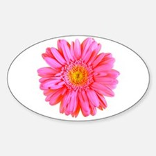 Gerbera (Bright Pink) Oval Decal
