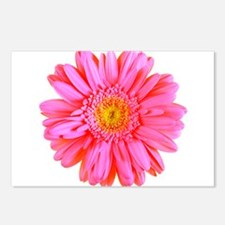 Gerbera (Bright Pink) Postcards (Package of 8)
