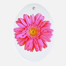 Gerbera (Bright Pink) Oval Ornament