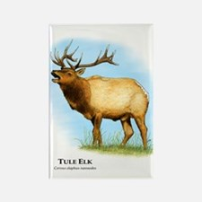 Tule Elk Rectangle Magnet