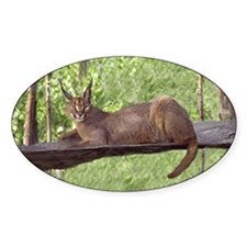Caracal Cat Laying Down Oval Decal