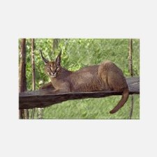 Caracal Cat Laying Down Rectangle Magnet