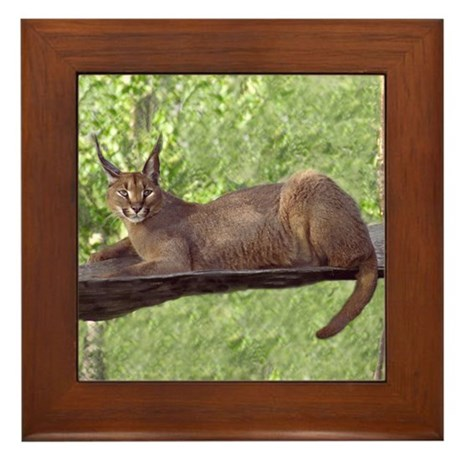 Caracal Cat Laying Down Framed Tile