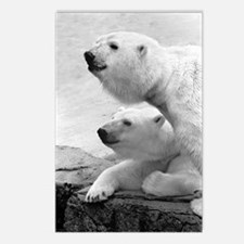 2 Bear Heads Postcards (Package of 8)