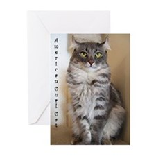 American Curl Greeting Cards (Pk of 10)