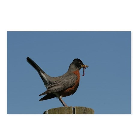 American Robin Postcards (Package of 8)