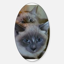 Two Cats Oval Decal
