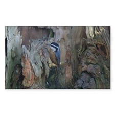 Red-Breasted Nuthatch Rectangle Decal
