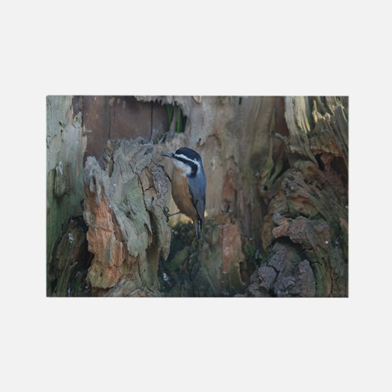 Red-Breasted Nuthatch Rectangle Magnet