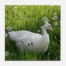 White Indian Peafowl Tile Coaster