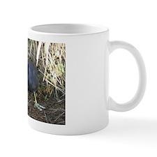American Coot Mug
