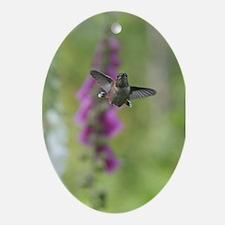Rufous Hummingbird Oval Ornament