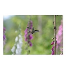 Rufous Hummingbird Postcards (Package of 8)