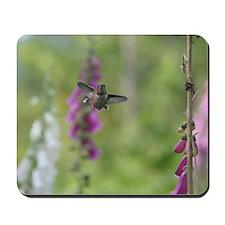Rufous Hummingbird Mousepad
