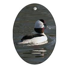 Bufflehead Oval Ornament