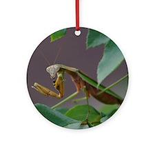Praying Mantis Eating Wasp Ornament (Round)