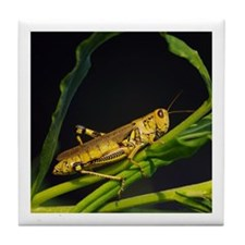 Grasshopper Tile Coaster