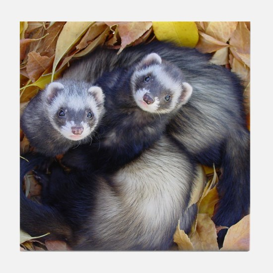Autumn Ferrets Tile Coaster