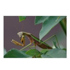 Praying Mantis Eating Wasp Postcards (Package of 8