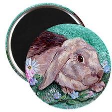 Maddison the Rabbit Magnet
