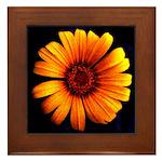 Yellow Daisy Fine Art Framed Tile